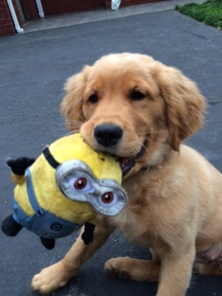 Minion, Minion, do you love me?