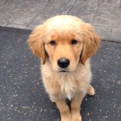 Pretty puppy!