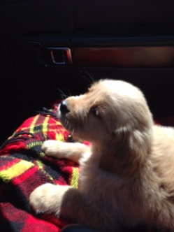 First car ride!
