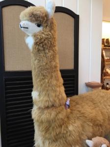 A Mama-riding-llama!