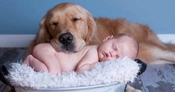 Dog and Baby Nap Together